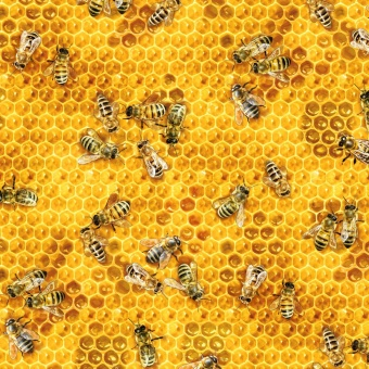 Bienchenstoff mit Bienenstock-Honigwaben - Honey Bees & Beehives Motivstoff - Bees & Flowers by Elizabeth Studios