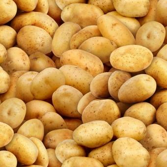 Kartoffelstoff Multi Potatoes - Food Festival by Elizabeth's Studio