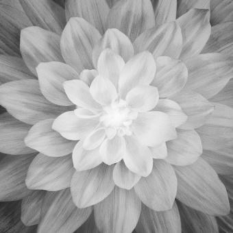 DIGITALDRUCK!  Blumenpanel Onyx Large Flower - Dream Big Digital Collection